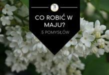 maj w Warszawie